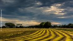 Baie de Somme champ de lin