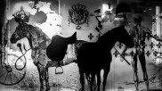 Horse, le haras, Strasbourg