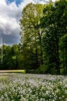 Parc du château de la Hulpe, Bruxelles