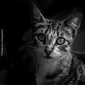 Cat, Marocco