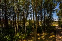 Bois d'Arcy IDF