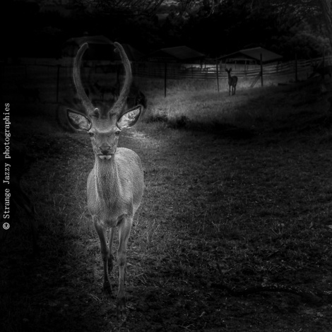Passeurs de Lumière Darkness IX