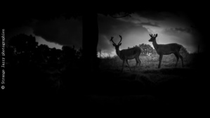 Passeurs de Lumière Darkness II