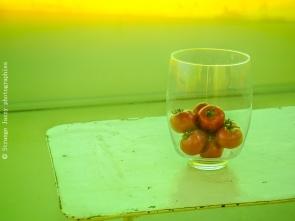 Nature morte aux Tomates