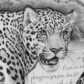 Jaguars détail